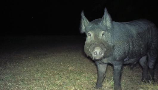 Τα ζώα προτιμούν τη νύχτα για προστασία από τον άνθρωπο