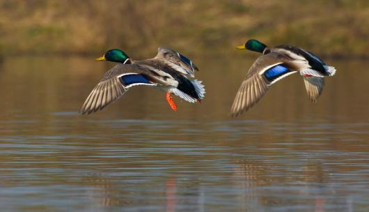 To ΚΕΕΛΠΝΟ ενημερώνει για τη γρίπη των πτηνών