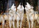 Το μεγάλο κυνήγι στο Ουισκόνσιν των ΗΠΑ
